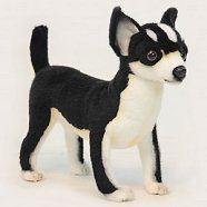 Hansa Black and White Chihuahua