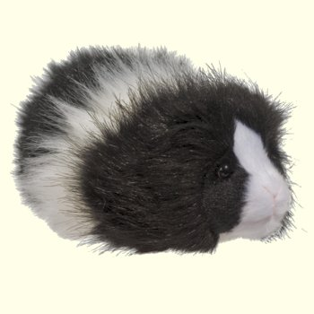 Douglas Angora Black and White Guinea Pig