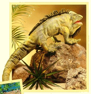Folkmanis Stuffed Iguana