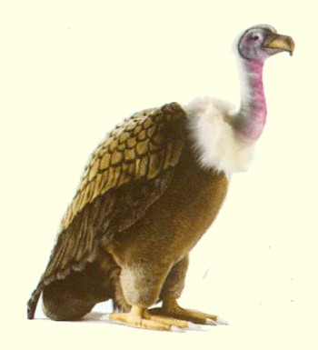 Plush Stuffed Vulture from Hansa